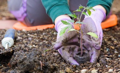 healthy gardening tips