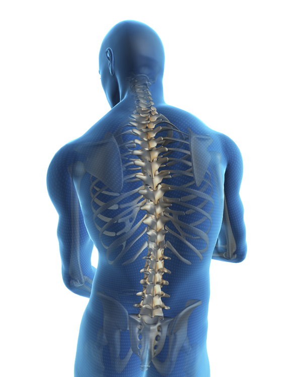 spine and back of person