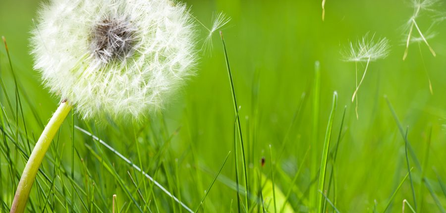 allergies can be reduced with chiropractic care