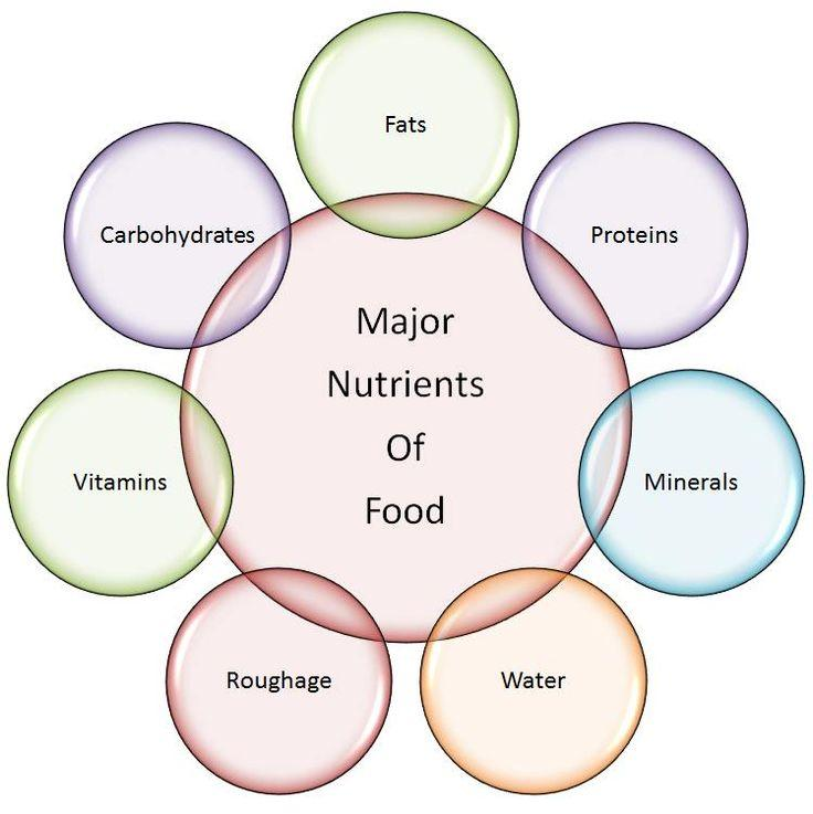 maor nutrients of food